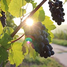 Green Wine_Blog