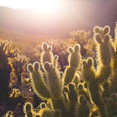 Cinco De Mayo_Cactus_Blog