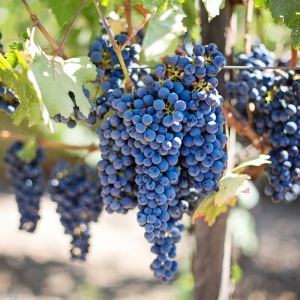 La Rioja- A Winemaking _Blog