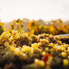 Chardonnay Day_blog