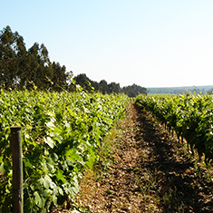 Portugal's Tejo Wine Region_blog
