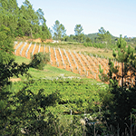 VY_Spain_sin-palabras-albarino-vineyard-slope