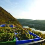 VY_Germany_Harvest_Rhine