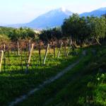 VY_Italy_Campania_mtn