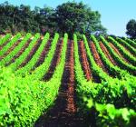 VY_France_Midi_Languedoc