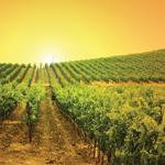 VY_California_Napa_vineyard_sunset