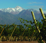 VY_Argentina_Zuccardi_Parral