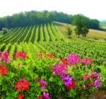 VY_France_flowersBergerac